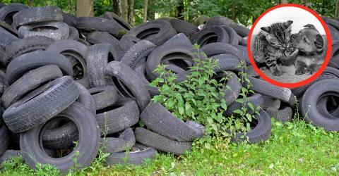 Geniale Idee: Mit recycelten Reifen hilft Amarildo Tieren und der Umwelt