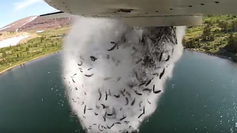 Deshalb werfen die Amis jetzt Fische aus dem Flugzeug!