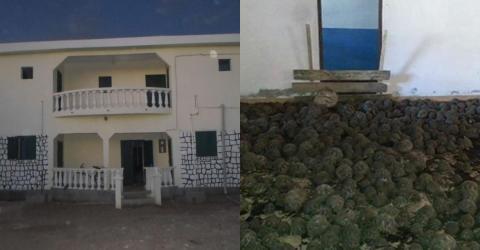 Strahlenschildkröten in Massen in Haus auf Madagaskar entdeckt