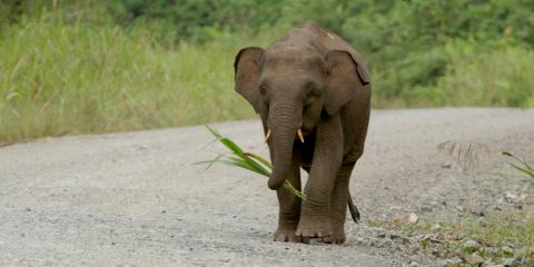 Nachricht von sechs Zwerg-Elefanten treibt uns die Tränen in die Augen