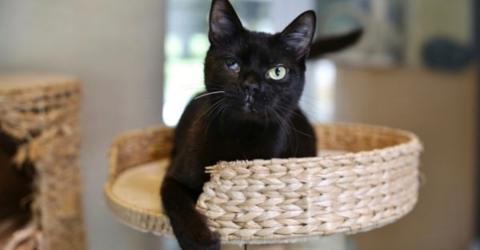 Trächtige Katze in Berlin überfahren: Bellas Geschichte ist ein Wunder