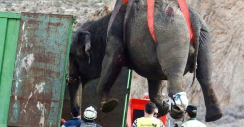 Nach Unfall: Dramatische Elefanten-Rettungsaktion, doch ein Happy End sieht anders aus!