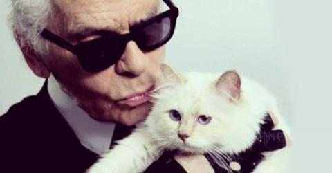 Nach Tod von Karl Lagerfeld: Schocknachricht um Katze Choupette
