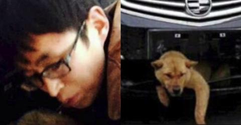 Mann überfährt Hund: Das Ende der Geschichte ist unglaublich!