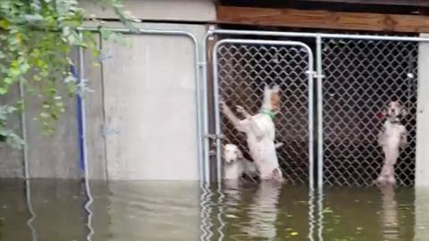 Hurrikan-Drama: Frauchen verschwunden, Hunde in Fluten eingesperrt...