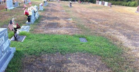 Eltern wundern sich über das immer grüne Grab ihres Sohnes. Dann kommen sie dahinter!