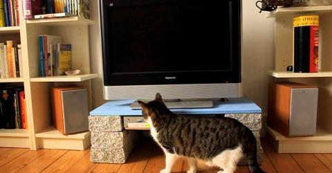 Mann filmt seine Katze im Wohnzimmer und ist sprachlos, was er da sieht