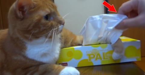 Genial: Wer diese Katze hat, sollte nie einen Schnupfen bekommen!