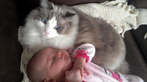 Diese Katze schützt ein Baby, als es vom Vater geschlagen wird