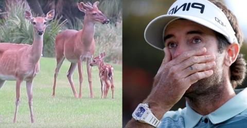 Riesen-Aufregung auf Golfplatz, als sich gefährliches Tier auf einmal nähert