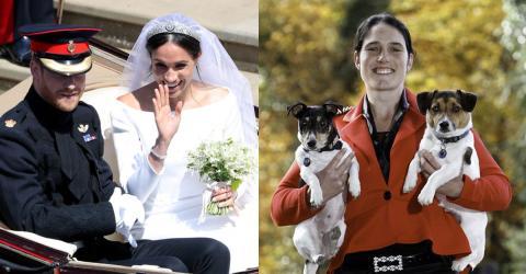 Engländerin stellt Hochzeit mit ihren Hunden nach. Manche schäumen vor Wut!