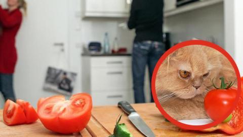 Tierschutzorganisationen fordern Strafen für Veganer