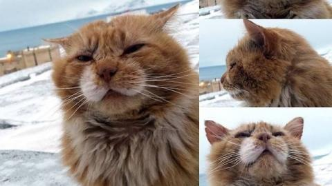 Dieses Tier ähnelt einer Katze, wie ein Ei dem Anderen! Doch du wirst erstaunt sein, zu erfahren, was es wirklich ist!