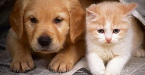 Tierliebhaber entsetzt: Stadt verbietet jetzt Haustiere!