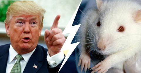 Tierversuche: USA treffen jetzt radikale Entscheidung!