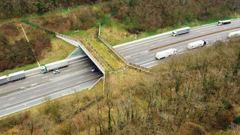 Öko-Brücke: Wie Wildtiere über die Autobahn kommmen