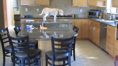 Sie filmt heimlich ihren Hund. Sie kann nicht fassen, was er da macht