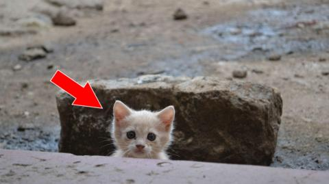 Ein Mann findet ein ausgesetztes Kätzchen. 5 Jahre später ist es nicht mehr zu erkennen!