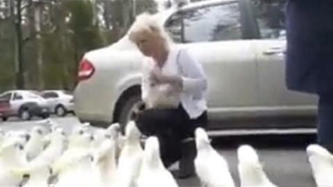 Sie denkt, sie füttert Tauben - dann kommt die Überraschung!