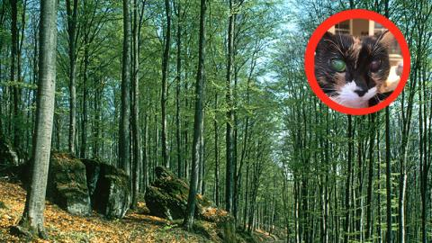 19-jährige Katze verirrt sich im Wald. Was dann passiert, macht sprachlos