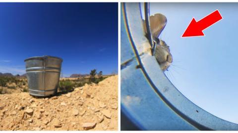 Er stellt einen Eimer mit Wasser in die Wüste und filmt die Reaktion der Tiere, die da zum Trinken kommen