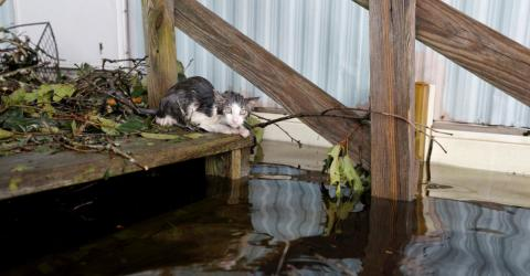 Hurrikan in den USA: Das Schicksal eines Kätzchens rührt die Welt zu Tränen