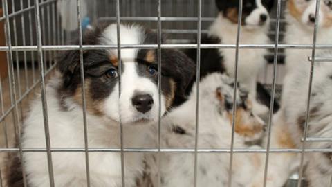 Tiere als Weihnachtsgeschenk: Kauf im Zoogeschäft oder im Tierheim?