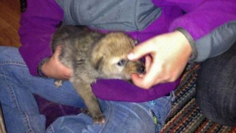 Sie nimmt einen ausgesetzten Hund nachhause und entdeckt erst dann, um welches Tier es sich handelt