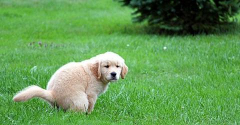 Fragst du dich auch, warum dich dein Hund beim Häufchen machen immer anstarrt?