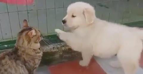 Dieser Welpe möchte mit der Katze spielen... sie reagiert einfach genial!