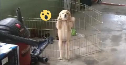 Welpe klettert über seinen Gitterzaun