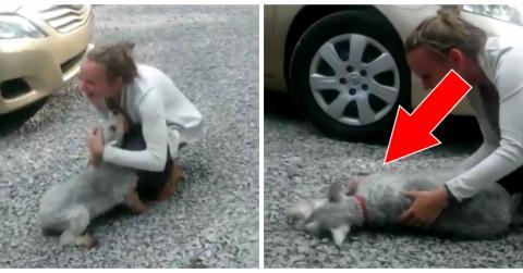 Herzergreifendes Wiedersehen von Hund und Frauchen nach zwei Jahren der Trennung