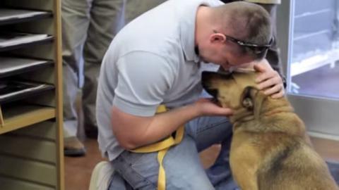 Dieser Hund hat sein zu Hause seit Monaten nicht gesehen. Das Wiedersehen mit seiner Familie ist bewegend