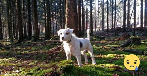 Gruselig: Immer mehr Hunde sterben drei Tage nach dem Gassigehen!