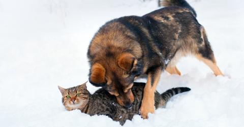 Als er die bewegungslose Katze im Schnee sieht, tut er alles, um sie zu retten