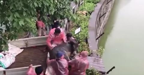 China: Lebendiger Esel wird Tigern zum Fraß vorgeworfen