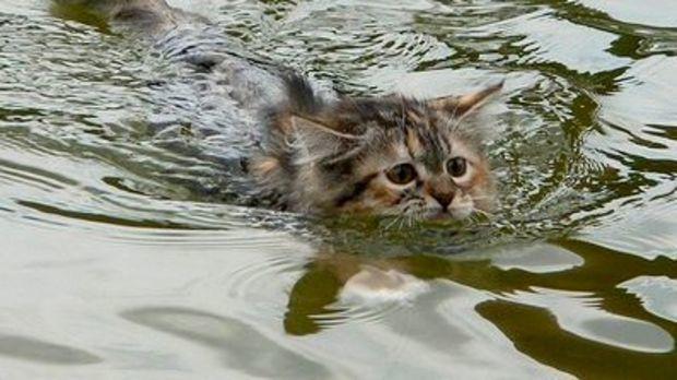 diese katze scheint meerwasser sehr zu lieben das wird sie verbl ffen. Black Bedroom Furniture Sets. Home Design Ideas