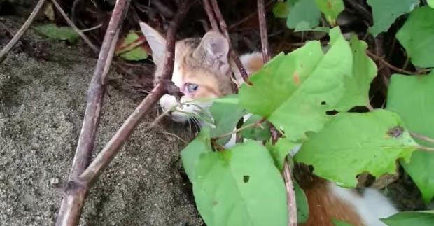 Katze von Brücke gefallen