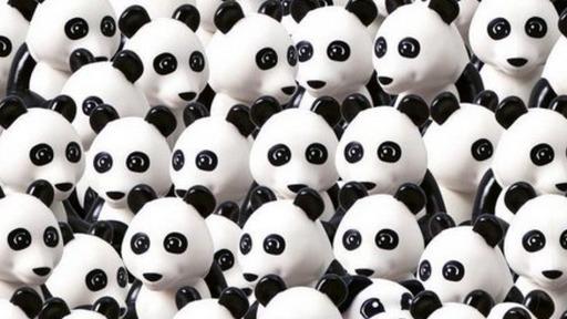 Pandas mit Hund