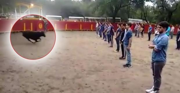 Experiment mit einem Stier