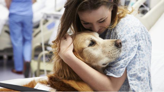Dieser Hund kann Krebs riechen