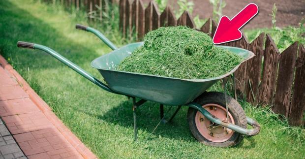 Gemähtes Grass ist wertvoll für den Garten! Zum Düngen und zur Unkrautbekämpfung...