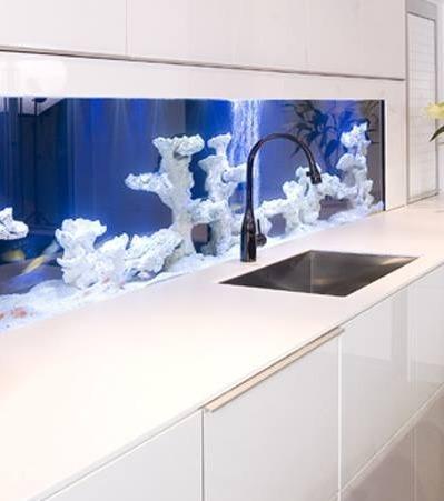 14 Ideen, um das Aquarium aufzupeppen