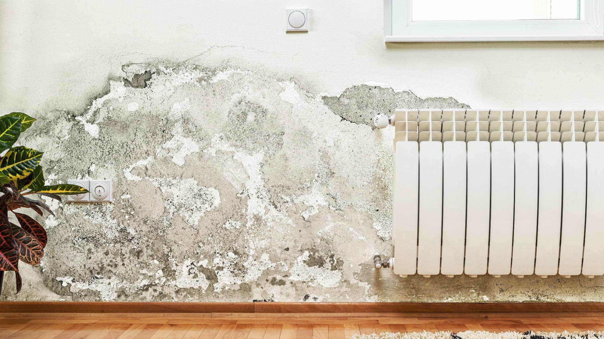 schimmel entfernen stoff amazing schimmel im bad entfernen reinigen versuch mit zironensure. Black Bedroom Furniture Sets. Home Design Ideas