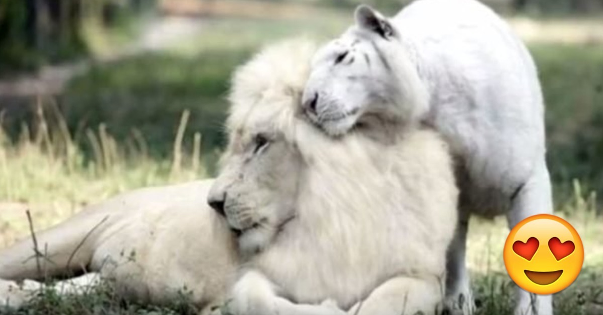 Wenn ein löwe mann verliebt ist