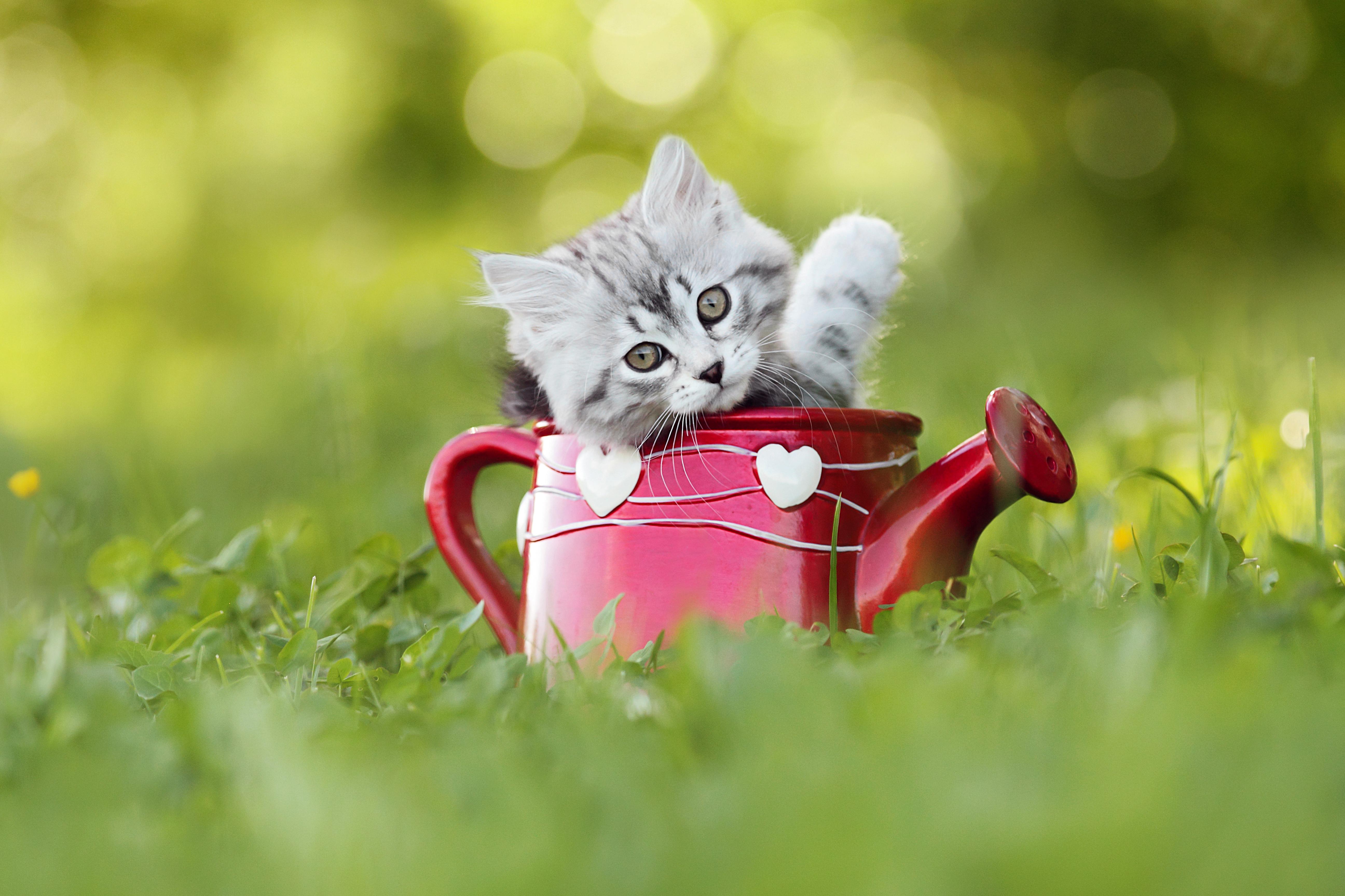 Astrologie: Welche Katze bist du deinem Sternzeichen nach?