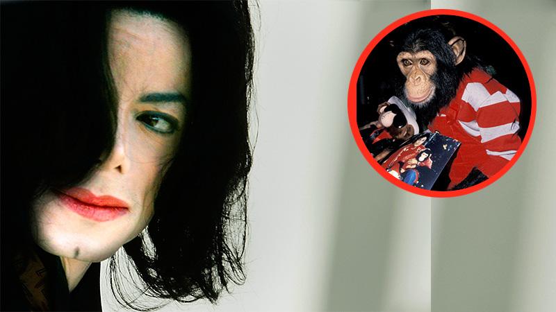 Michael Jackson: Das ist aus Bubbles, dem Schimpansen des Sängers, ge…