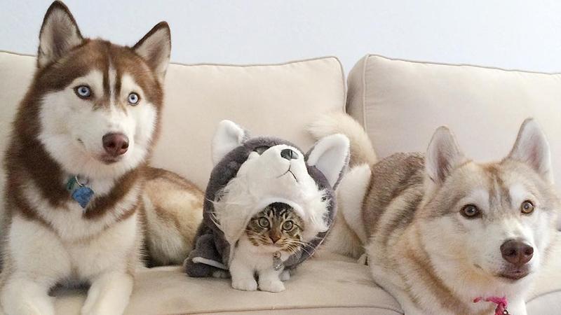 Aus diesem rührenden Grund denkt Kätzchen Rosie, es sei ein Husky…
