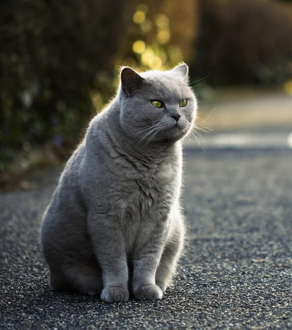 Gemütlich Mantel Draht Katzen Ideen - Schaltplan Serie Circuit ...