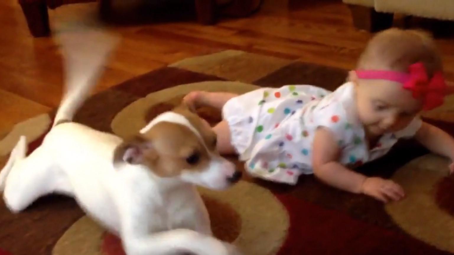 Dieser Hund bringt diesem Baby etwas Erstaunliches bei. Sehen Sie ...